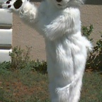 Fursuit abc-BearyWhite2