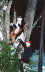 Furbo SF2002 furbo-ren-tree